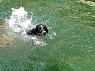 Aux vasques : et même un chien !