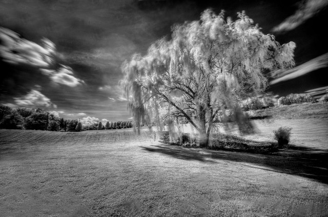 Willow (IR)