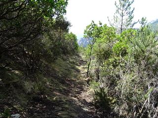 Descente du chemin de Paliri après les travaux : le chemin