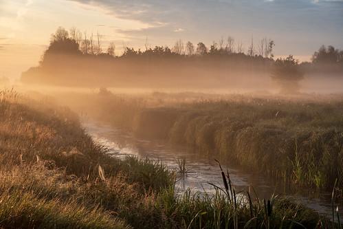 landscape nature poland mazovia stream water mist fog sunrise morning dawn grass tree forest golden