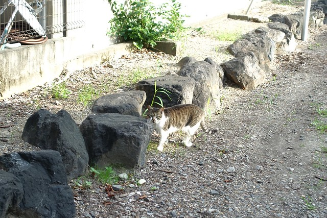 Today's Cat@2019-07-15