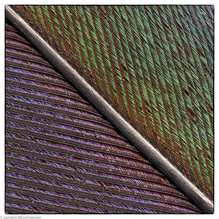 Patterns in nature - Feder / Feather