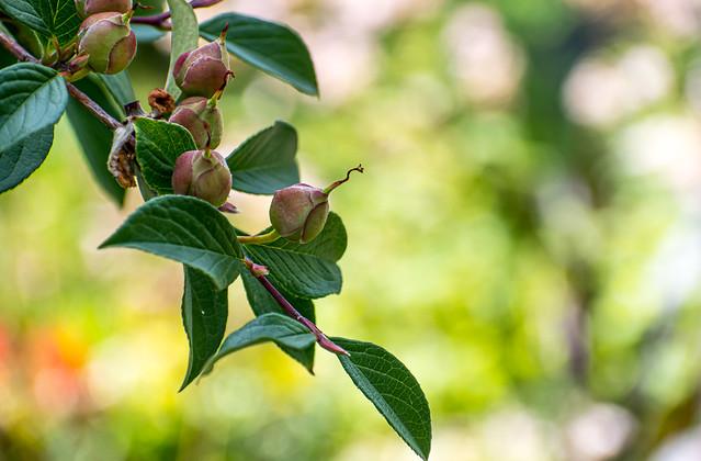 Tree Buds Hang