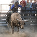 Johnson County Pro Bull Riding 2019
