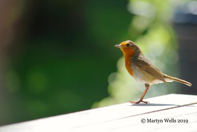 Robin @ The Booking Hall