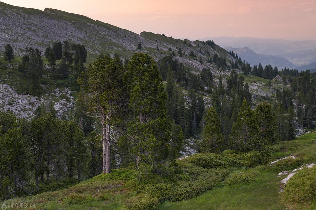 Trees - Seefeld