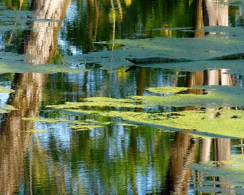 Reflection on Pennsylvania Canal