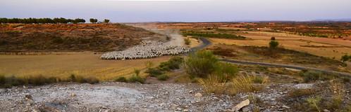 El ramat, la pols i el rastoll... colors del meu poble.
