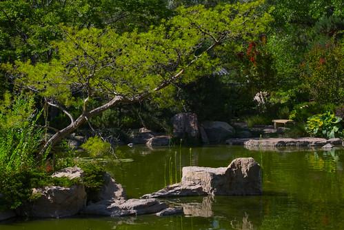 Sasebo pond in July