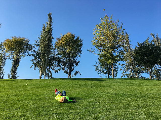 Grass in Krasnodar