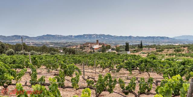 Vinyes al Molar  Priorat  Tarragona