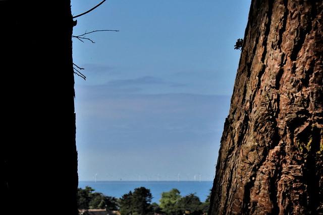'Twixt Sea and Pine'.