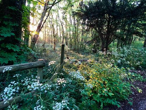 wimpole cambridgeshire sunlight dawn sunrise flowers woods trees flickrsbest