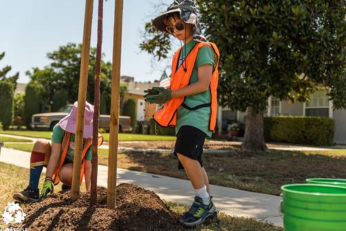 San Fernando - Calles Verdes - Tree Care