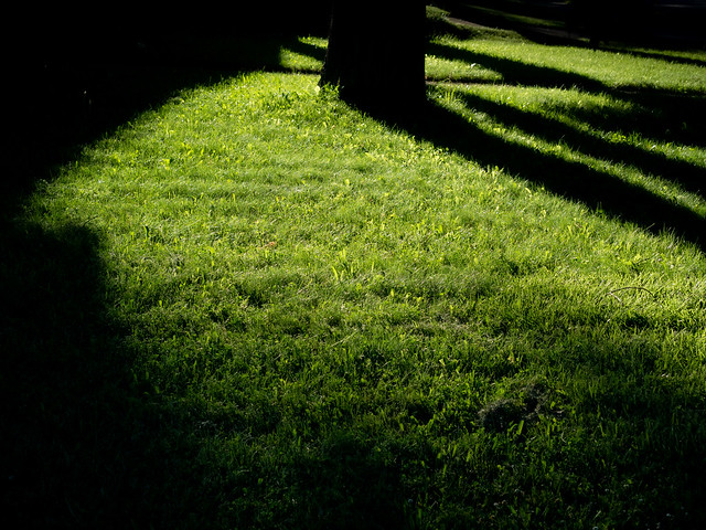 Lawn and shadows