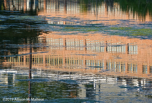 UMASS Reflections