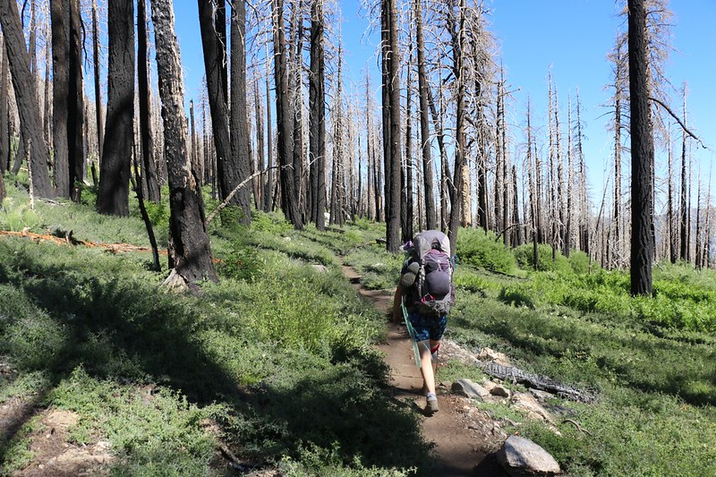 Hiking out on the South Fork Trail through all the dead trees from the Lake Fire