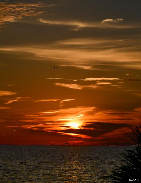 Osprey Soars Over Stunning Sunset Tampa Bay Florida - IMRAN™