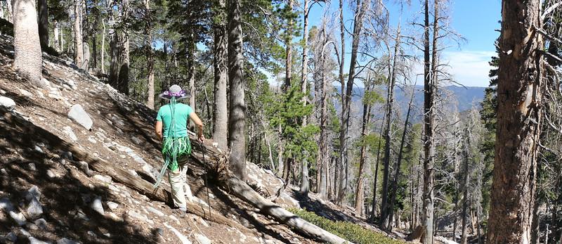 Side-hilling on the steep slope below Charlton Peak