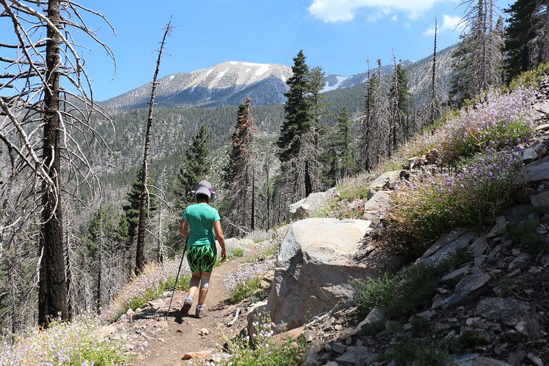 San Gorgonio Mountain in the distance as we descend on the Dollar Lake Trail