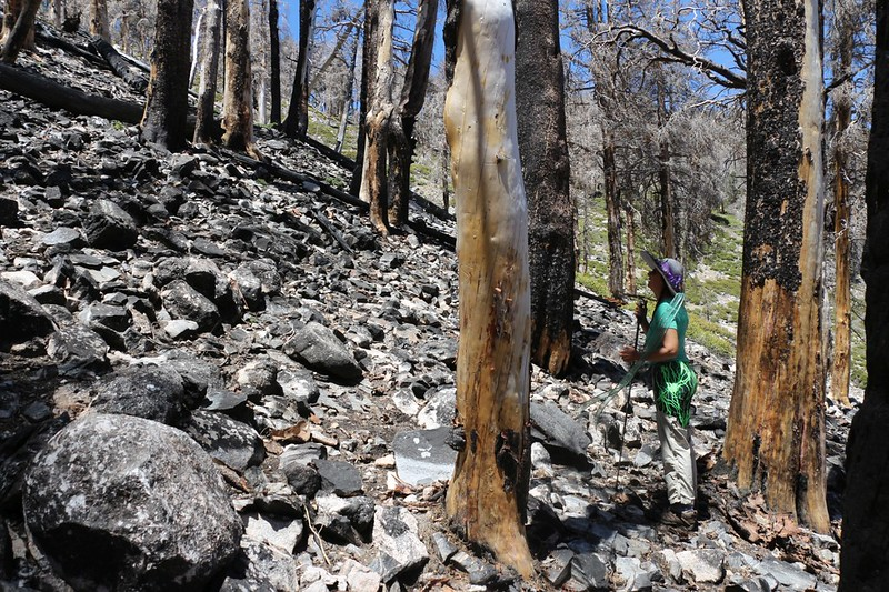 This section on the east side of Charlton Peak burned so much that even the rocks look burned