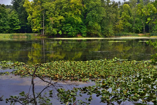 Lily Pads and Forest to Complete a Setting Around Kendall Lake (Cuyahoga Valley National Park)