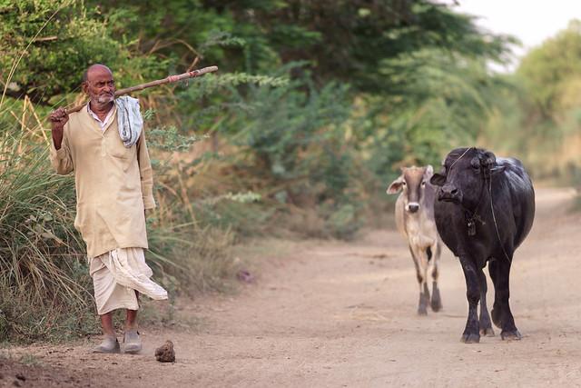 Herding - Nikon 180mm 2.8 ai-s ED