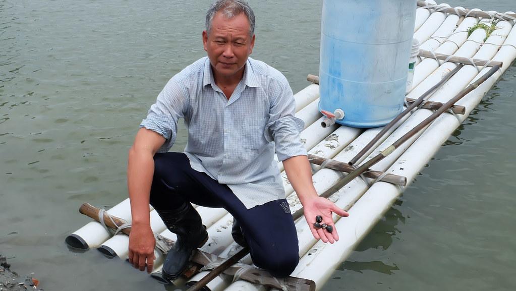 七股沿海土地資源保護協會理事長楊惠欽說明七股沿海的生態養殖以文蛤為主,每年秋末春初的曬池是供過冬水鳥食物來源之一。攝影:陳文姿