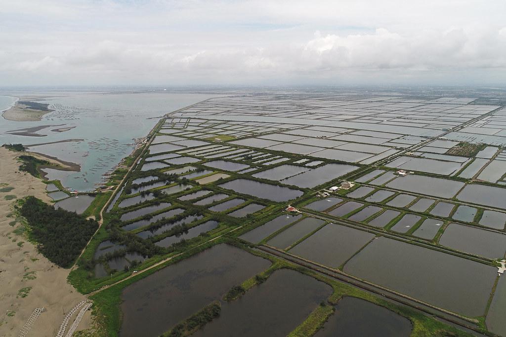 七股臨海地區的文蛤養殖為以直接引用海水、不抽地下水的生態養殖方式打入市場。攝影:許震唐。