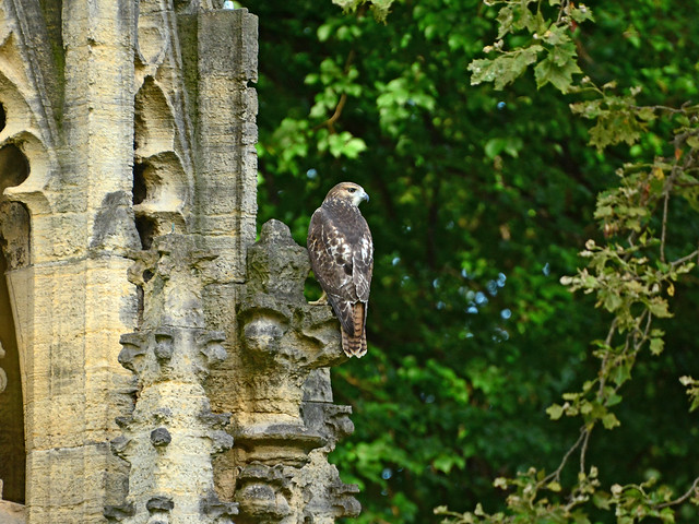 Fledgling on a Pulpit - 4072