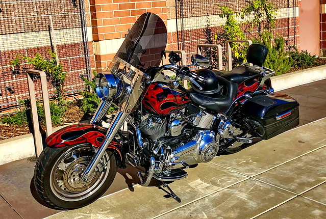 A gleaming Harley-Davidson: A real looker! (+1)