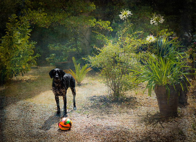 Houps with her ball