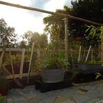 Rustic Garden frames