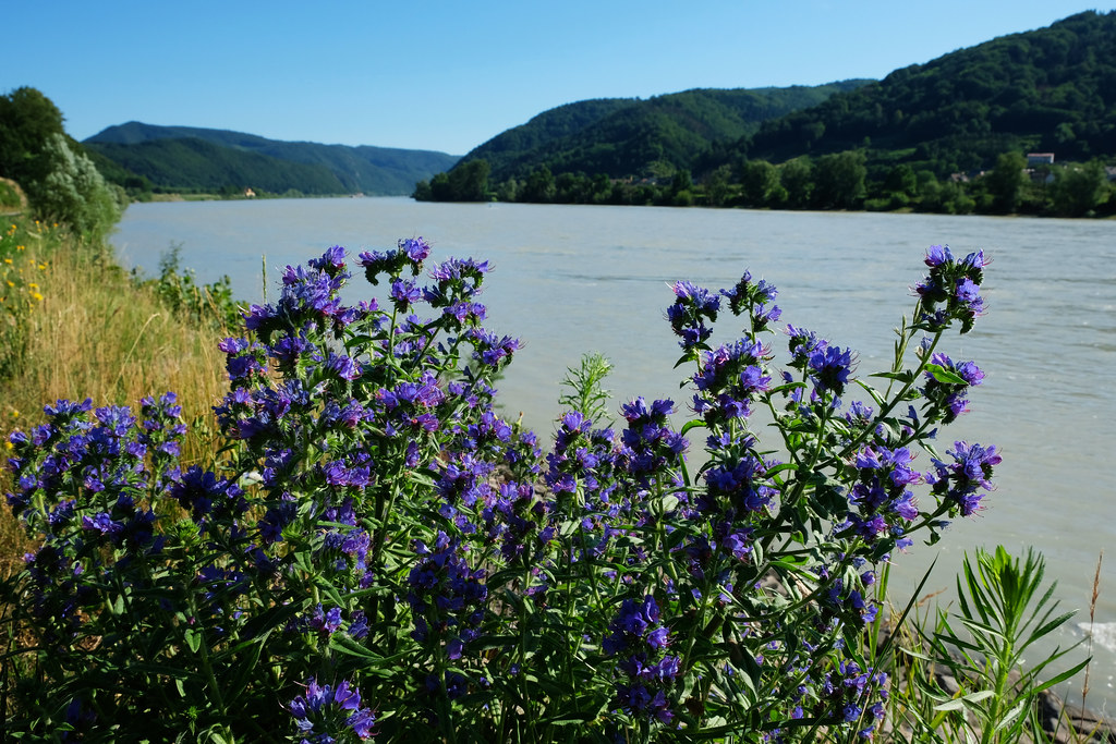 Best Day Trips From Vienna: Wachau Valley, Austria