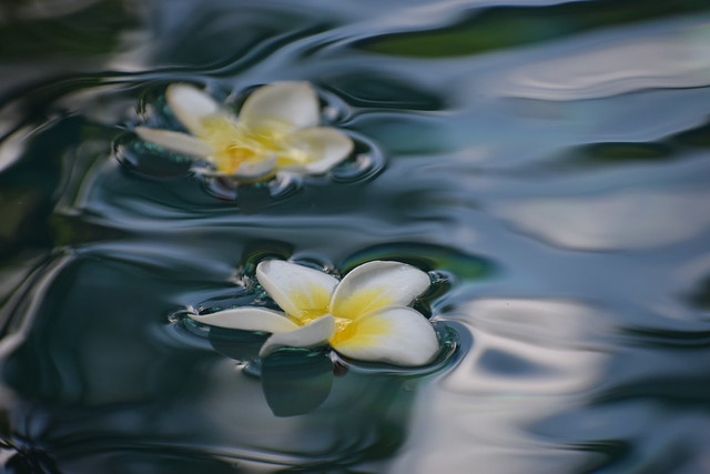 Flowers floating down the river