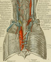 This image is taken from Page 685 of An atlas of human anatomy for students and physicians, v.5-6