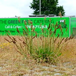 Weeds in front of the Green Frog at Preston Docks