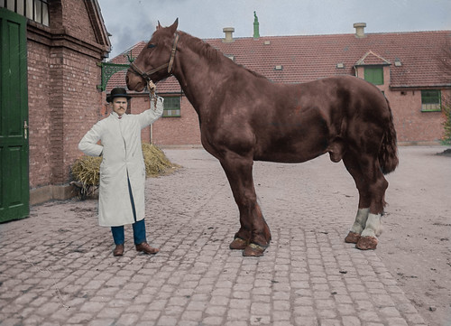 A horse at the Royal Veterinary and Agricultural University in Copenhagen (early 1910s)