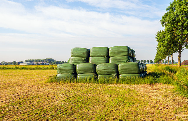 Stacked rectangular bales of hay