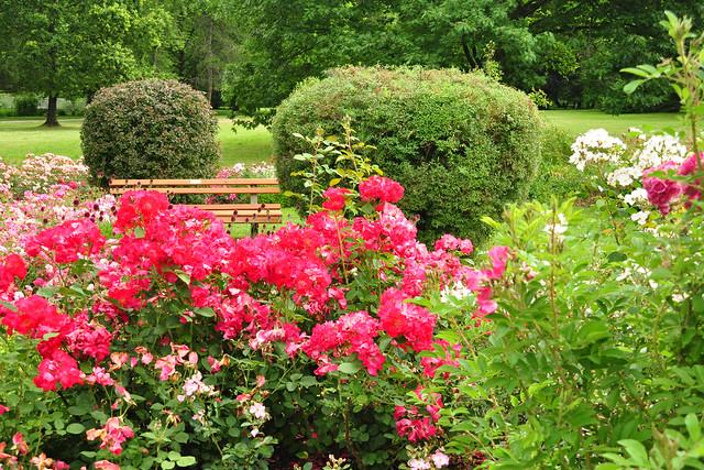 Gartenreisen Juli 2019 ... Rosengarten in Bad Wörishofen ... Fotos: Brigitte Stolle