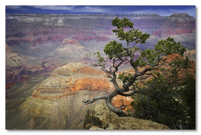 Grand Canyon sentinel