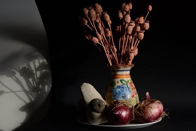 DSC_2681_5398. Natura morta con Papaveri secchi - Cipolle rosse e Echinoderma fossile della Majella -Still life with dried poppies, red onions and Majella fossil Echinoderm -