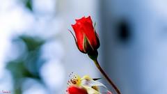 Flower - 7091