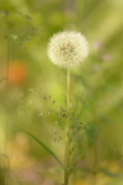Summer Meadow...