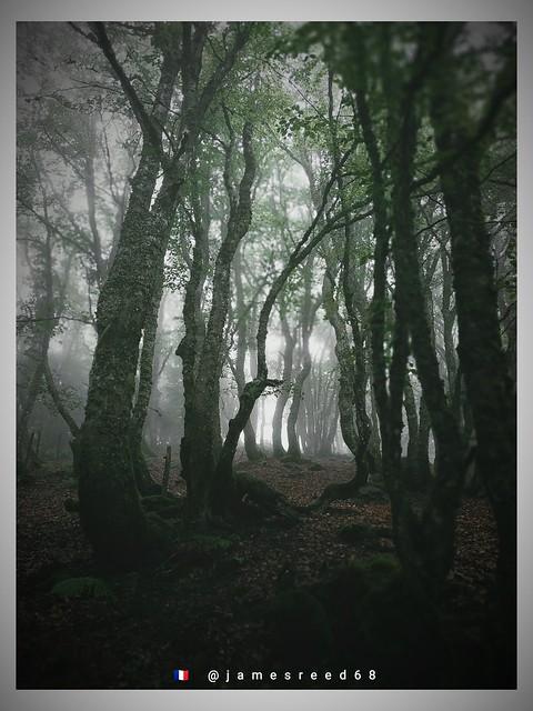 Forêt enchantée  -  Bewitched forest