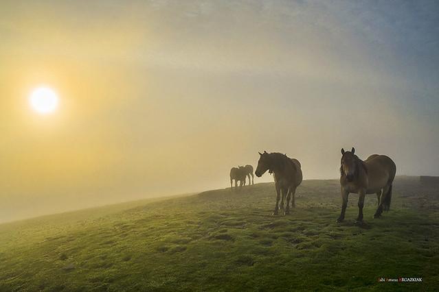 Sol, niebla y yeguas