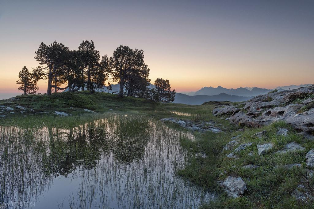 Trees and tarn - Seefeld
