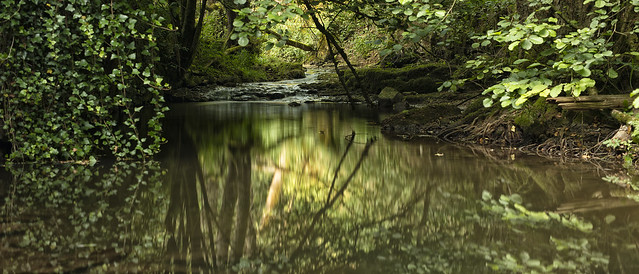 Reflections in the green shadow