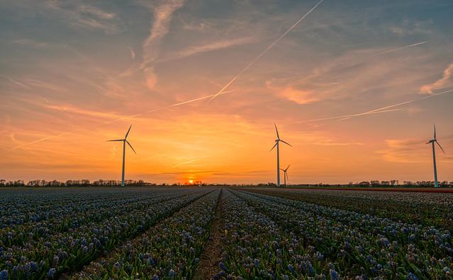Four wind turbines holding their breath.