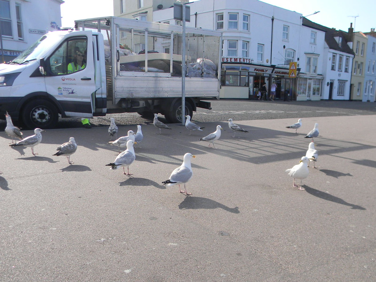 Gulls aloud Dover to Deal